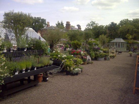 Medicine Garden: The Green House