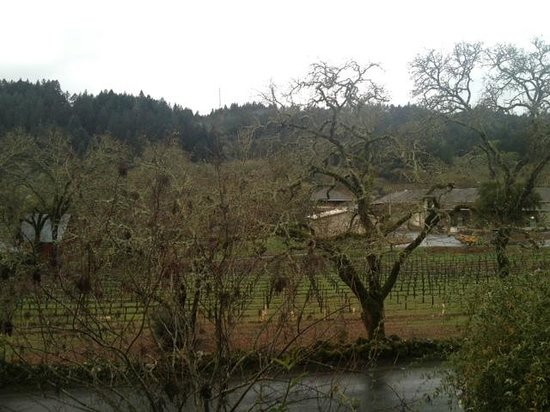 The Wine Country Inn: View from our room