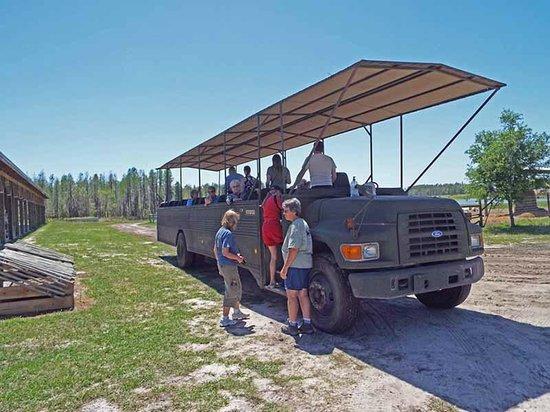 Safari Wilderness: Safari Vehicle