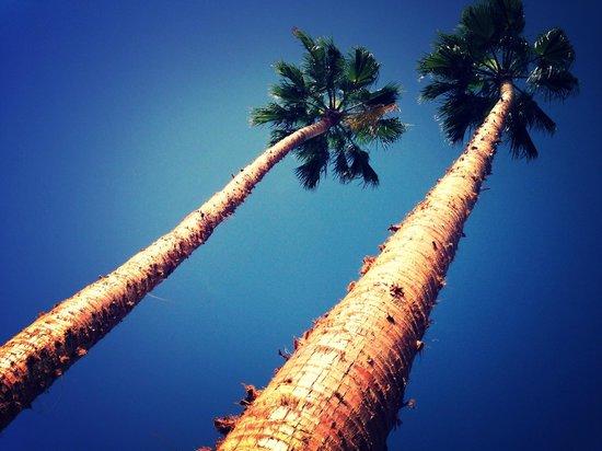 Jardin del sol apartments updated 2016 apartment reviews for Bungalows jardin del sol playa del ingles