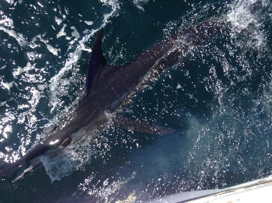 Swiss Travel Costa Rica Day Tours: Blue Marlin
