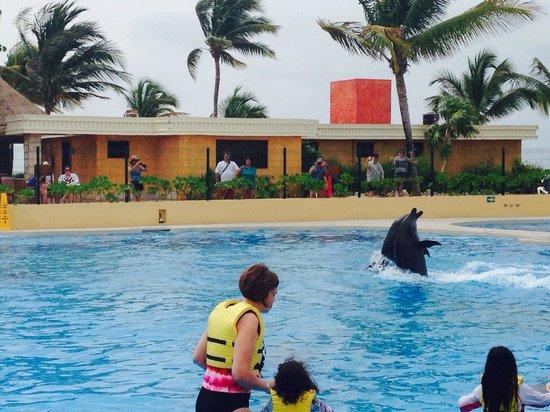 Dolphinaris Barcelo: Delfín