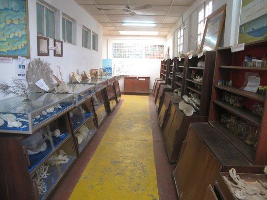 Toliara, Madagaskar: Экспонаты музея