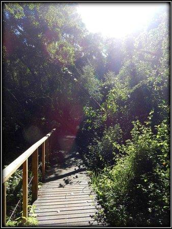 Wilderness National Park: Trail