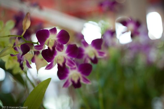 Royale Chulan Kuala Lumpur: beautiful flowers in the lobby area