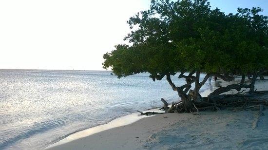 Camacuri Apartments Aruba: Spiaggia vicina al Camacuri