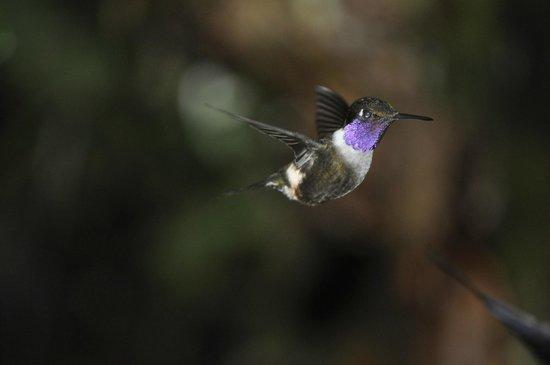 Hostal Jardin de los Pajaros: birds