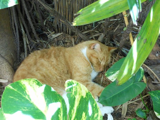 Alexander's Guesthouse: Hercules, the resident kitty