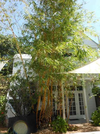 Alexander's Guesthouse: Bamboo trees near one of the rooms and the hot tub