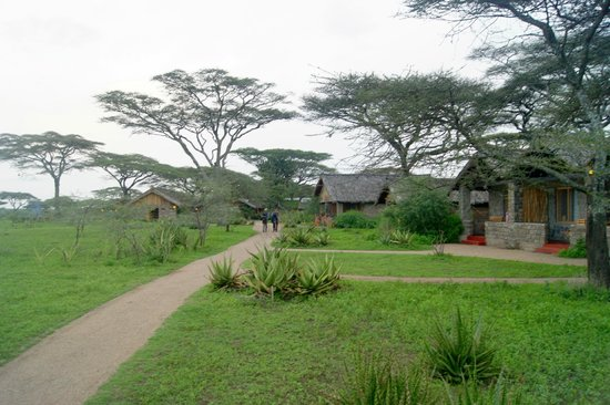 Ndutu Safari Lodge: path to lodge