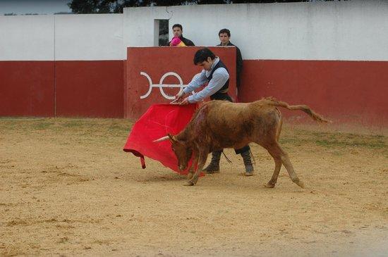 La Carlota, Ισπανία: En la Ganaderia de Osborne con Victor Abad y Chamanieto