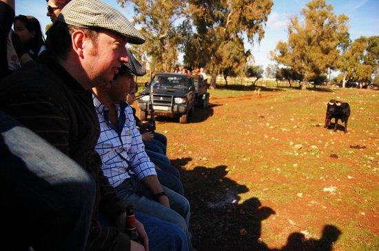 Entre Toros y Caballos: Con la Asoc. Cultural Taurina en una visita a los cercados de los Toros Bravos