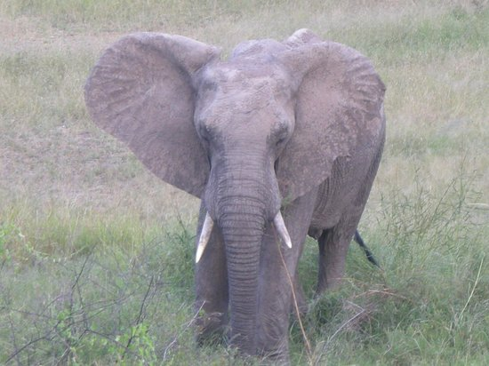 Jock Safari Lodge: Elephant
