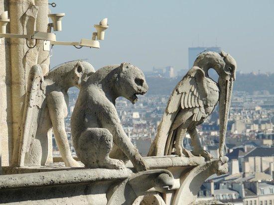 Tours de la Cathedrale Notre-Dame : gargoyles