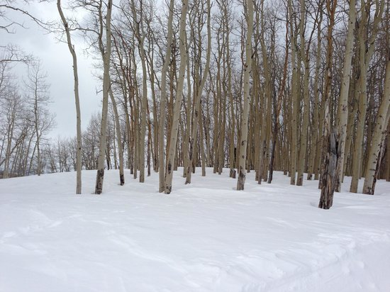 Beaver Creek Nordic Center: Beautiful views of the quaking aspen