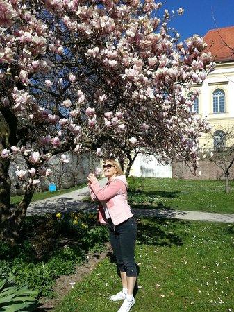 Schloss Dachau: Магнолии в марте цветут
