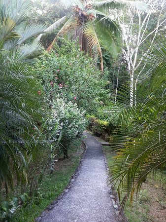 Lanzas de Fuego Surf & Adventure Lodge: Garden path from Sunset Lodge to Ranchero