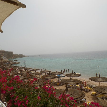 Reef Oasis Beach Resort : Awesome beach