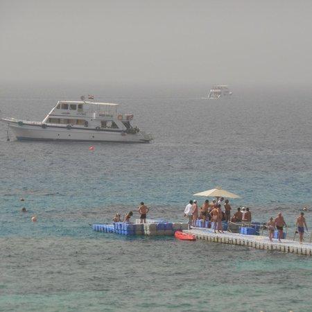 Reef Oasis Beach Resort : snorkling/diving