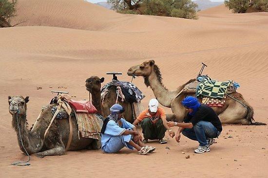 Desert Berber Fire-Camp: bivouac merzouga