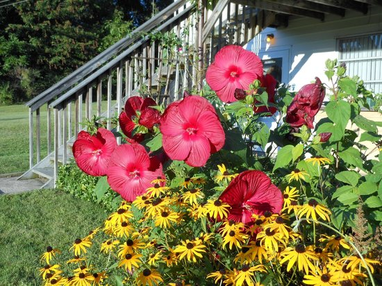 Mountain Meadows Bed & Breakfast: some of the beautiful flowers around the yard