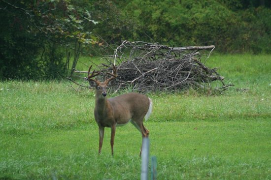 Mountain Meadows Bed & Breakfast: A very nice buck coming up to get a treat form Art