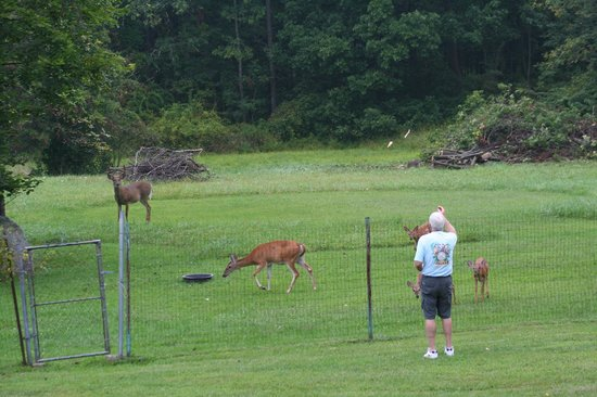 Mountain Meadows Bed & Breakfast: Feeding the deer - just beyond the fenced in yard.