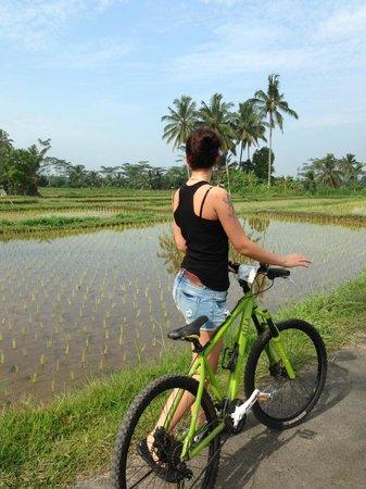 Alila Ubud: велопрогулки