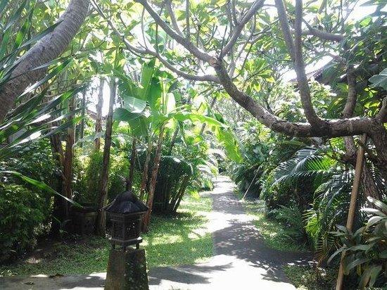 Bumi Ayu Bungalows: Garten