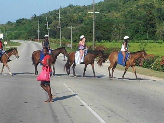 Jamaica Exquisite - Day Tours: Horseback Riding