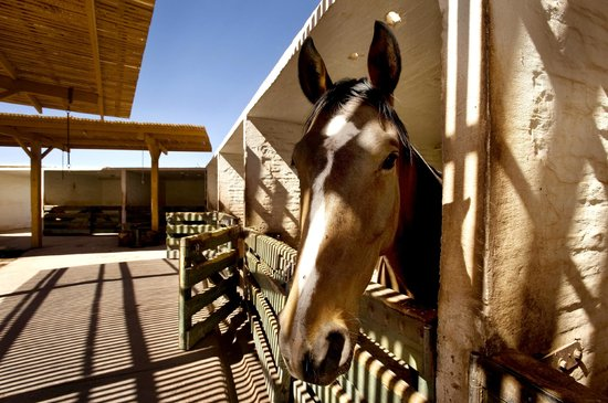 Explora Atacama - All Inclusive: Horse stables at Explora Atacama