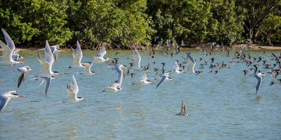 Everglades Area Tours : Take Off