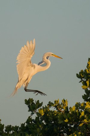 Everglades Area Tours : Coming in for the Night