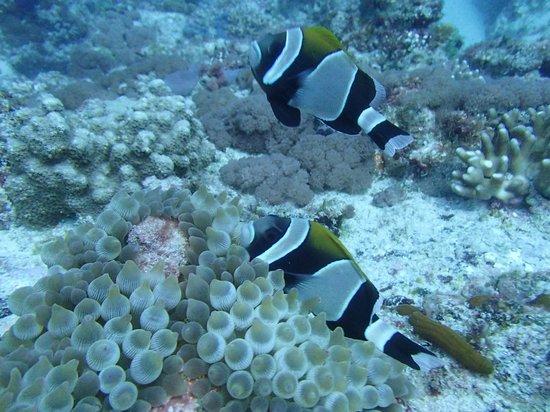 Howea Divers: Sea life on the dive - vis was 25m