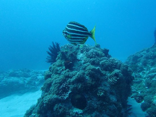 Howea Divers: Sea life on the dive