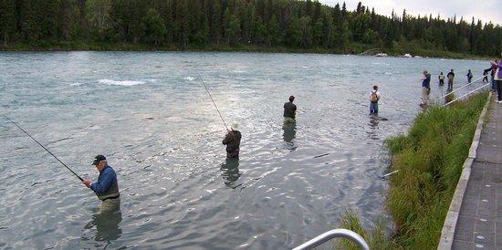 Quality Inn Kenai: Salmon Fishing
