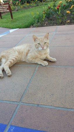 Sirenis Punta Cana Resort Casino & Aquagames : The friendly cat!