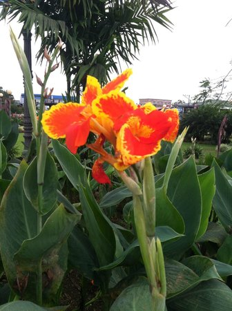 Tabacon Thermal Resort & Spa: Gorgeous flora abounds