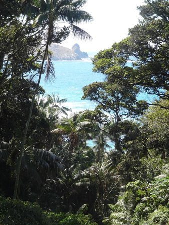 Lord Howe Island Walking Trails: Along the track to Clear Place