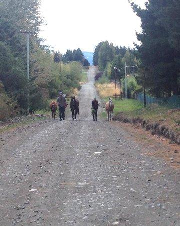 Cabalgatas & Aventura ArianePatagonia: End of the day, walking the horses back to their paddock