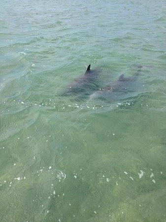 Wild About Dolphins: dolphins on our outing today