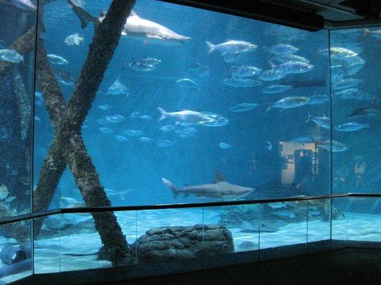 Seahorse Exhibit Picture Of Audubon Aquarium Of The