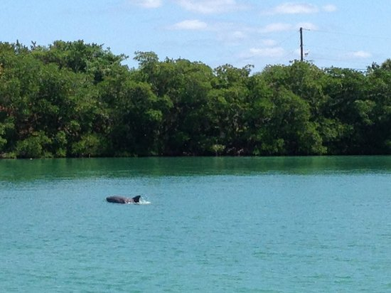 Miami Sailing - Private Day Charters: Dolphins