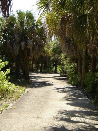 Island Boat Adventures : Egmont Key