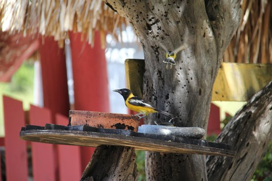 Rancho El Sobrino Restaurant: Fun to watch the birds while dining