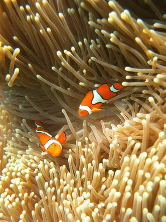 Wavelength Reef Charters: Is that you Nemo ?