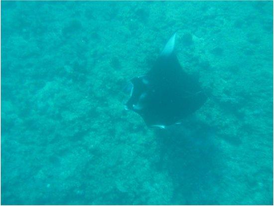Mirihi Island Resort: snorkeling with Mantas at Mantas Point
