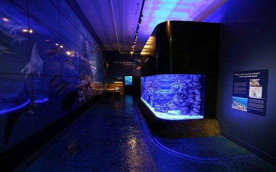 Mokupapapa Discovery Center: 3500 Gallon Aquarium