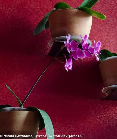 Catedral Restaurante & Bar: Entrance: A Wall of Potted Orchids-Exquisite