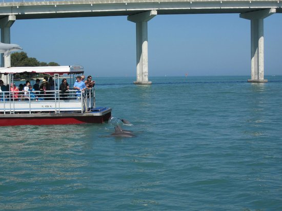 Dolphin Sighting Picture Of Clearwater Marine Aquarium Clearwater Tripadvisor